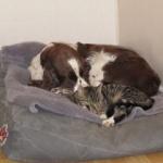 Lisa och katten myser