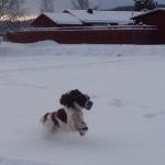 Otto i snön