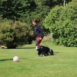 Inte lätt att få med sig hunden när det ligger skålar med korv och man har en boll mellan benen