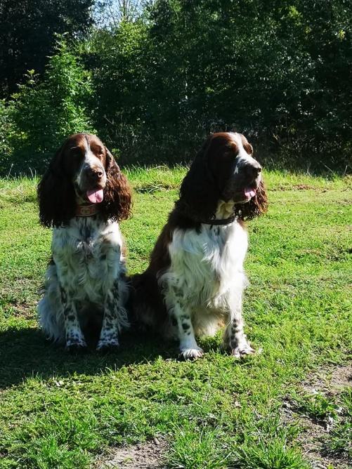 Coco och Chippen, två fina syskon i Mästarklass!