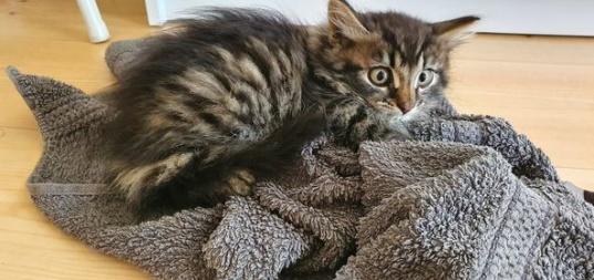 Titta på ögonen, så här ser inte en avslappnad katt ut som Fluffy ser ut här.