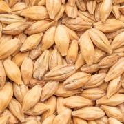 Mörk Vetemalt  Wheat Malt Dark