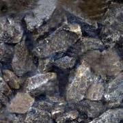 Kandisocker Mörk
