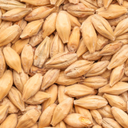 Syramalt , Acidulated malt