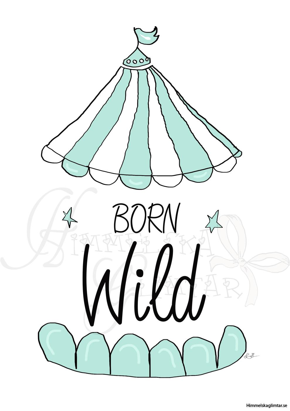 born wild mint