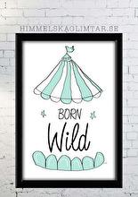 Born Wild - Olika färger