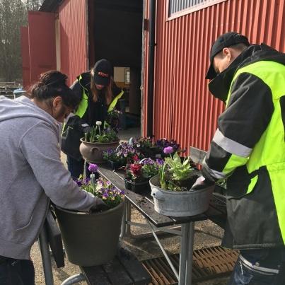 deltagare på Utemiljöskötsel kursen planterar blommor i stora utomhuskrukor,