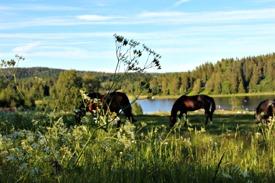 Egna hästar på gården. Hästunderstödd terapi
