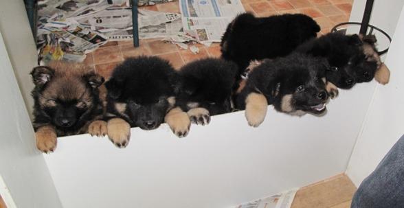 Vart har tiden tagit vägen. Om bara fyra dagar flyttar de små till sina nya hem.