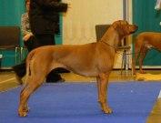 Singoalla BIR , CACIB och BIG 4, My Dog 2007 Foto Helena Dovier