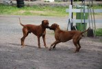 Leo och Khola