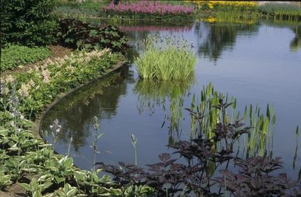 Ecolat kantband runt dammkanten