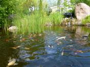 Fiskdamm hos Dammcenter