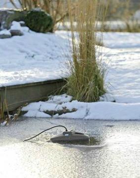 Höst och vinter i dammen - Isfritt