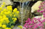 Vatten växter