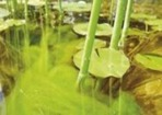 Bekämpa och förebygga algtillväxt