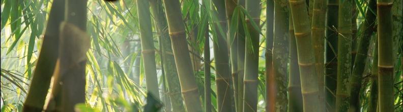 bambu, bamburör, japansk trädgård, trädgårdskonst