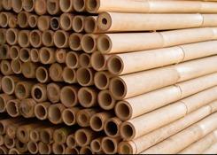 bambu bamburör japansk trädgård
