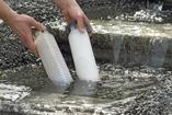 Förebygga alger, Oase AcuaActiv, alger i dammen