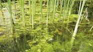 Bekämpa alger i trädgårdsdammen, Oase AquaActiv