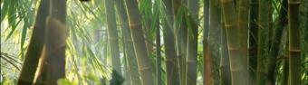 Bambu, bygga japansk trädgård