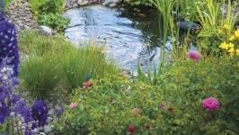 trädgårdsdamm, dammar, dammtillbehör