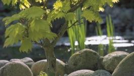 trädgårdsdammar, inspiration , dammar , dammprodukter