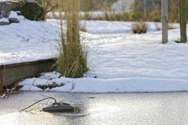 Vinter i dammen