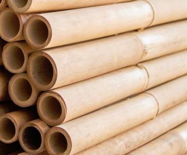 bambu till din trädgård
