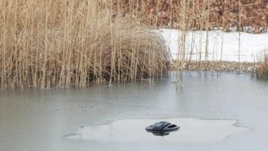 vinter i dammen , dammvärmare, icefree