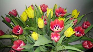 tulpaner , växter önnetad