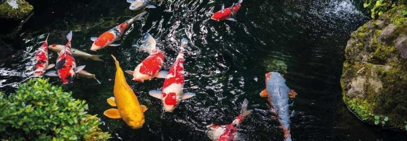 trädgårdsdammar fisk dammbygge