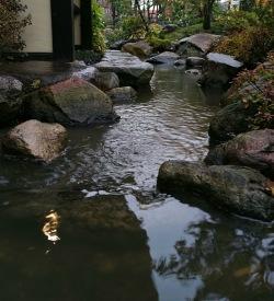 Porlande bäck japansk trädgård