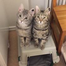 Milo & Molle