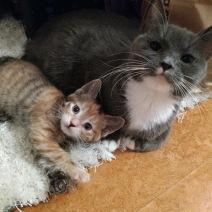 Lilo+Leia