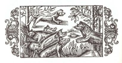 """Pigs from """"Historia de gentibus septentrionalibus"""" by Olaus Magnus (1555)"""