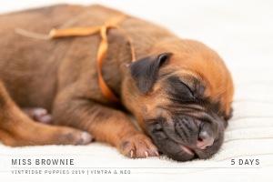 brownie-2