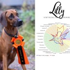 Lilly-bph