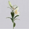 Lilja vit tiger Lija 75cm