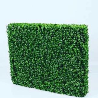 Boxwood häck 85 cm -