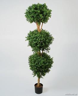 Hög Boxwood buske 170 cm -
