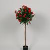 Ros på stam boll form röd 80cm