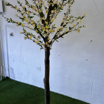 Körsbärsträd med äkta stam 180cm