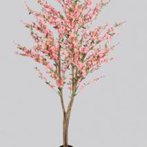 Körsbärsträd med äkta stam med rosa blommor 180cm