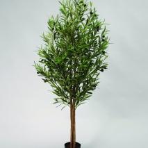 Olive träd på stam 110cm