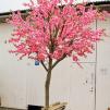 Körsbärsträd med äkta stam 350cm - 2 - pack
