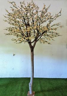 Vitt Körsbärsträd med äkta stam 350cm -