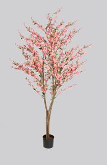 Körsbärsträd med äkta stam med rosa blommor 180cm - Styckpris