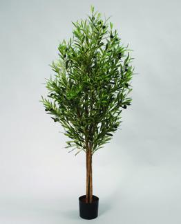 Olive träd på stam 110cm - Styck pris
