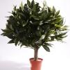 Lagerbolls träd 50 cm